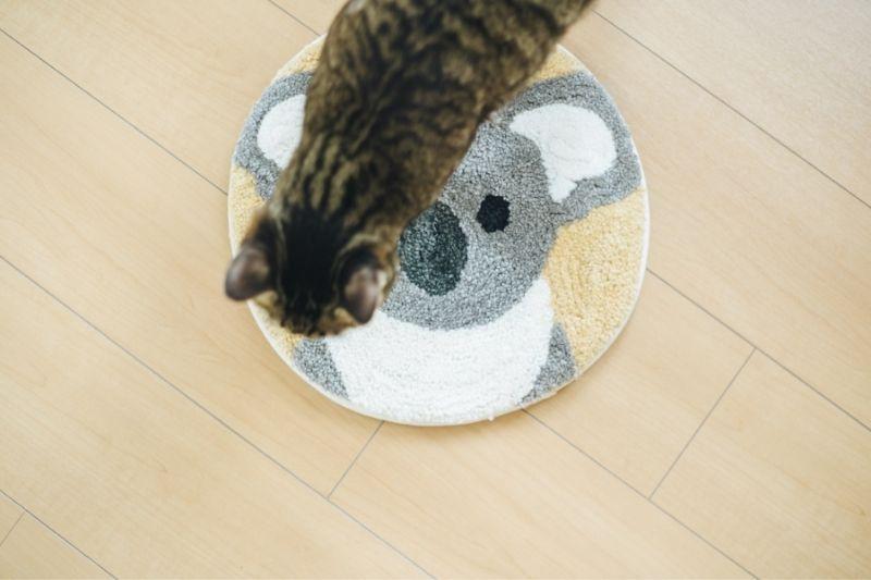 cat stepping on a mat