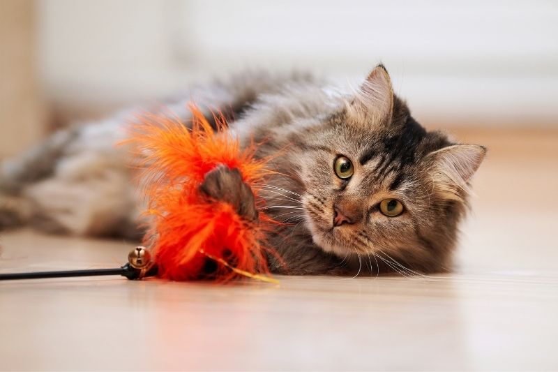 cat laying down with toy