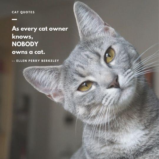 Cat quote