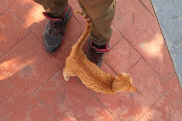 cat following a person