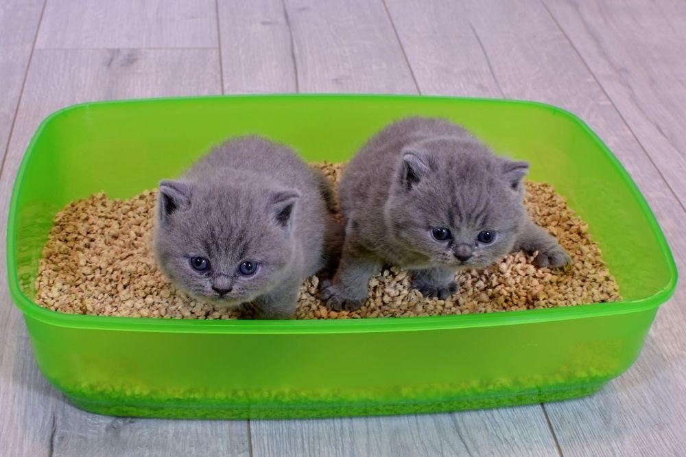 2 kittens sitting in a litter box