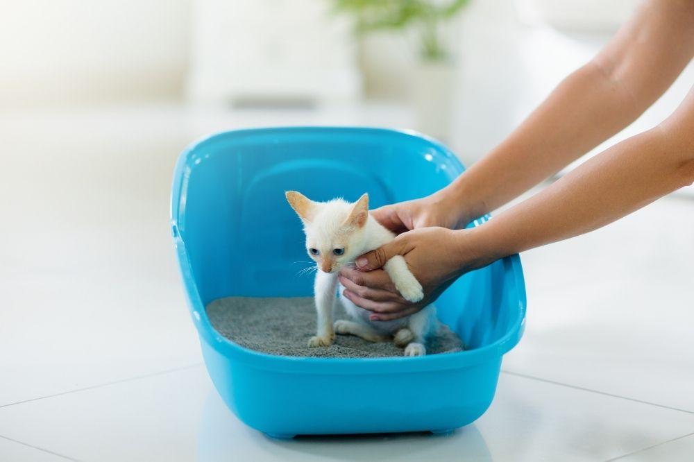 Kitten being put in the litter box.
