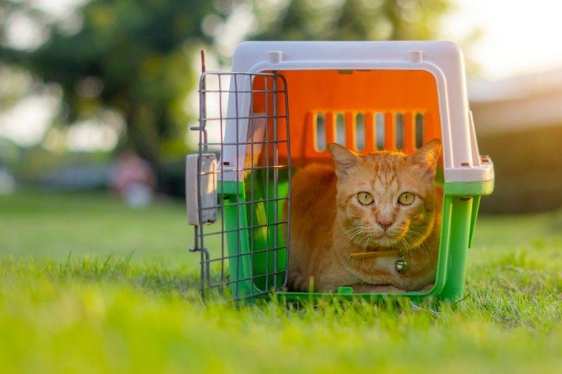 cat sitting in a crate