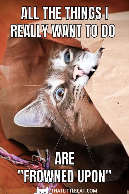 cat in a paper bag