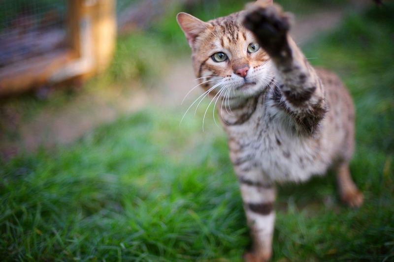 cat swiping at the camera