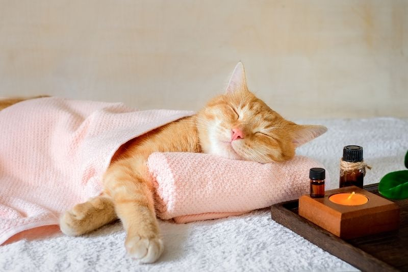 cat relaxing at spa
