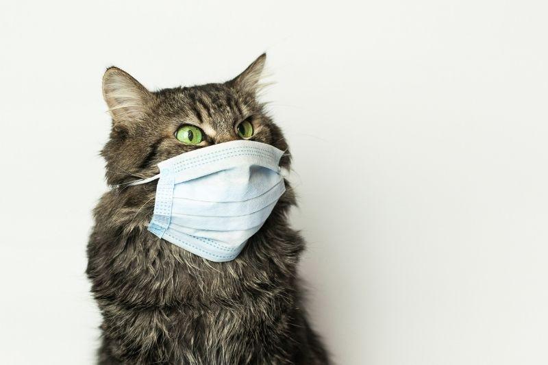 cat wearing medical mask