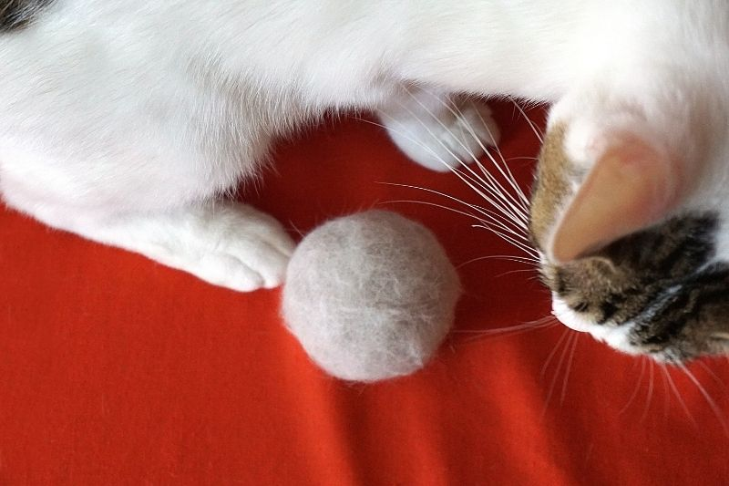 cat with hairball