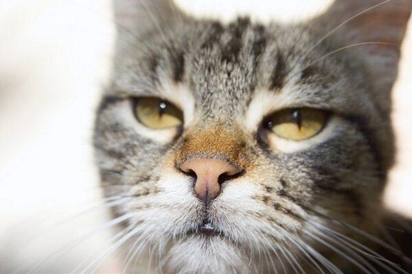 cat leering