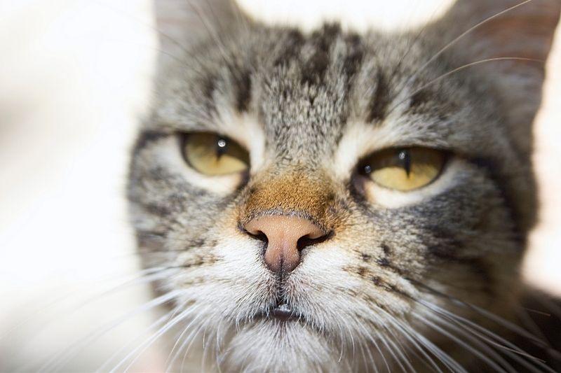 cat leering at camera