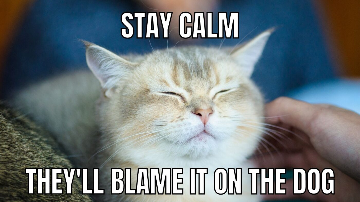 stay calm cat meme