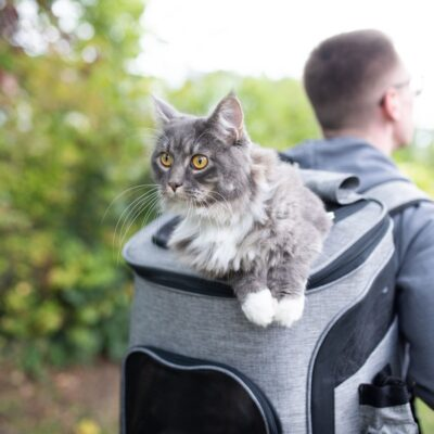 man with cat backpack and grey cat