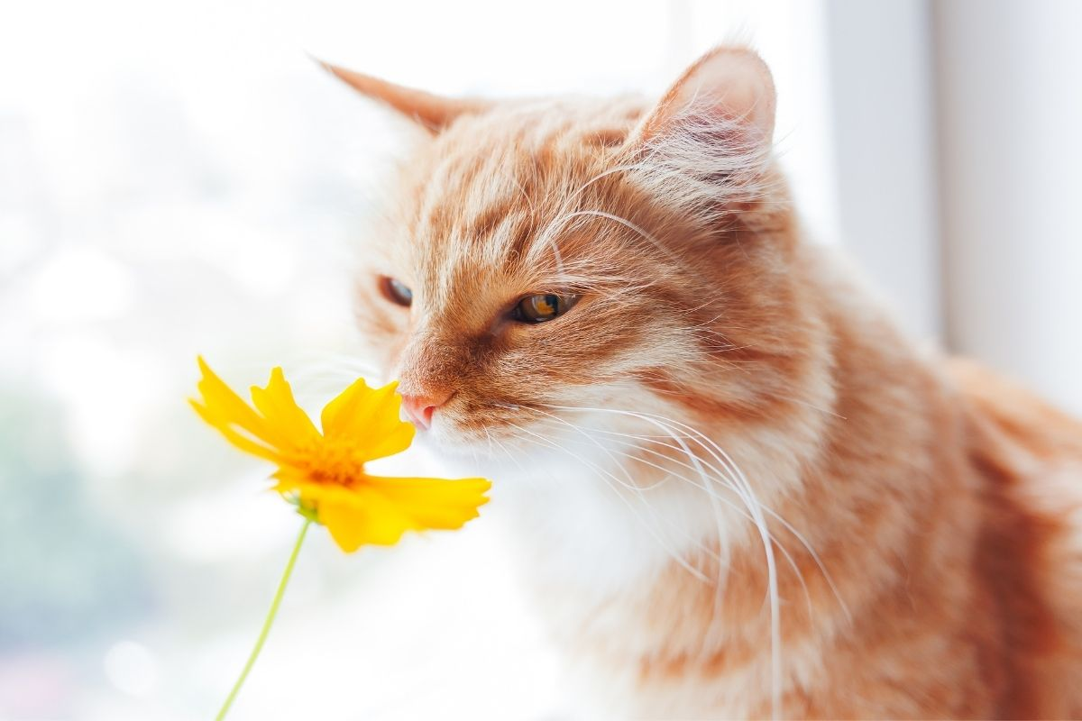 Cat with a flower