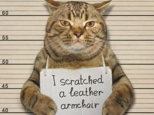 cat with a sign that says I scratched a leather armchair