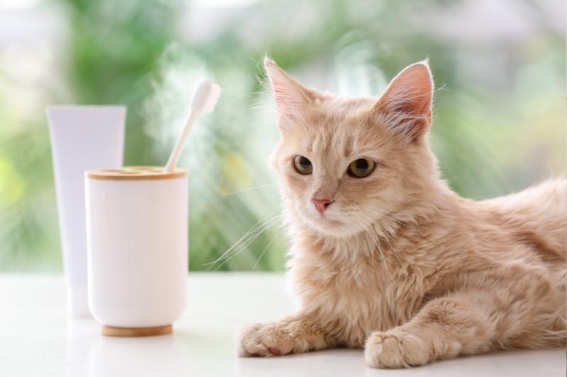 cat sitting next to toothbrush
