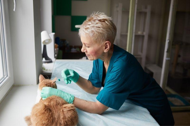 veterinarian giving a cat vaccine