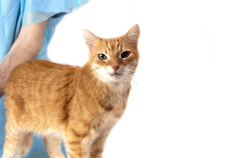 cat with veterinarian in backround