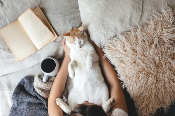 cat laying on owners lap