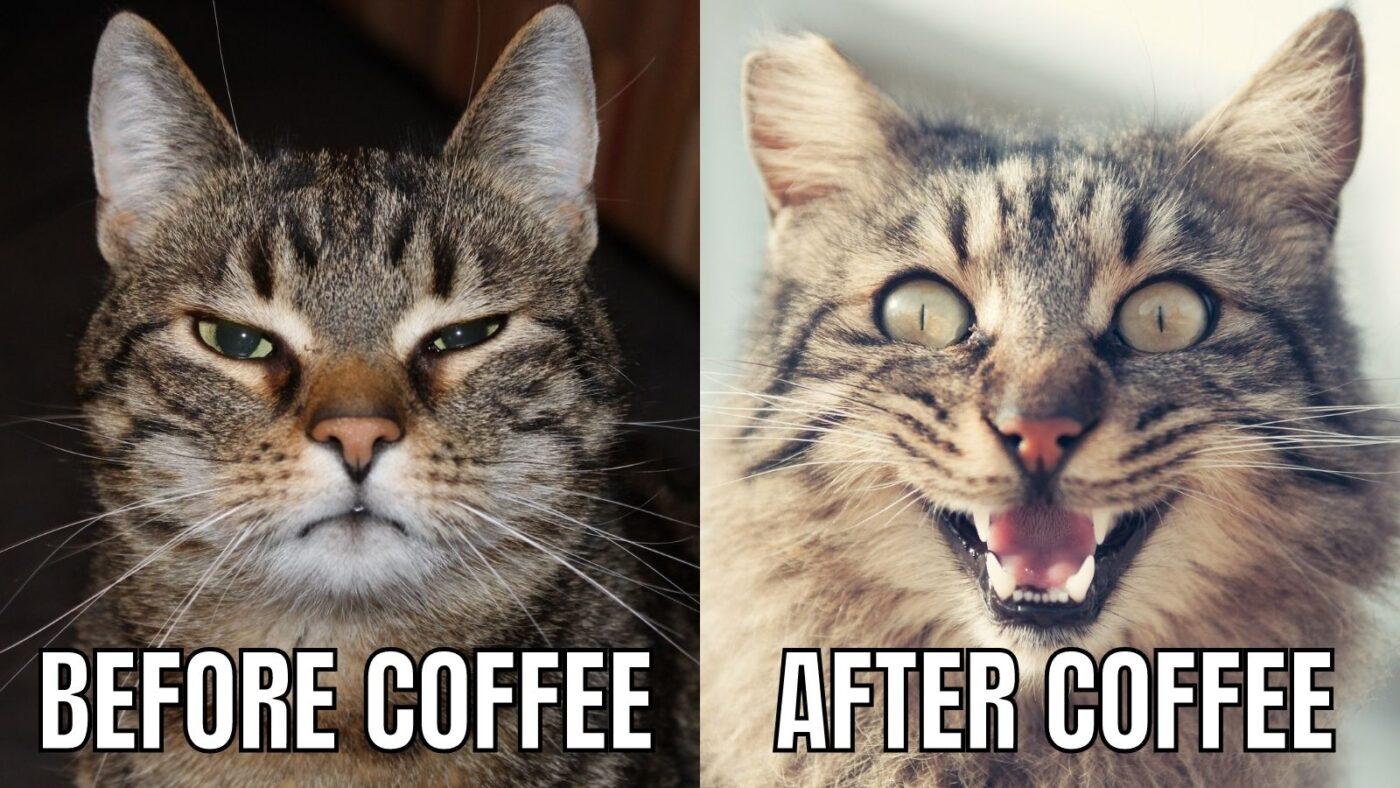 coffee cat meme