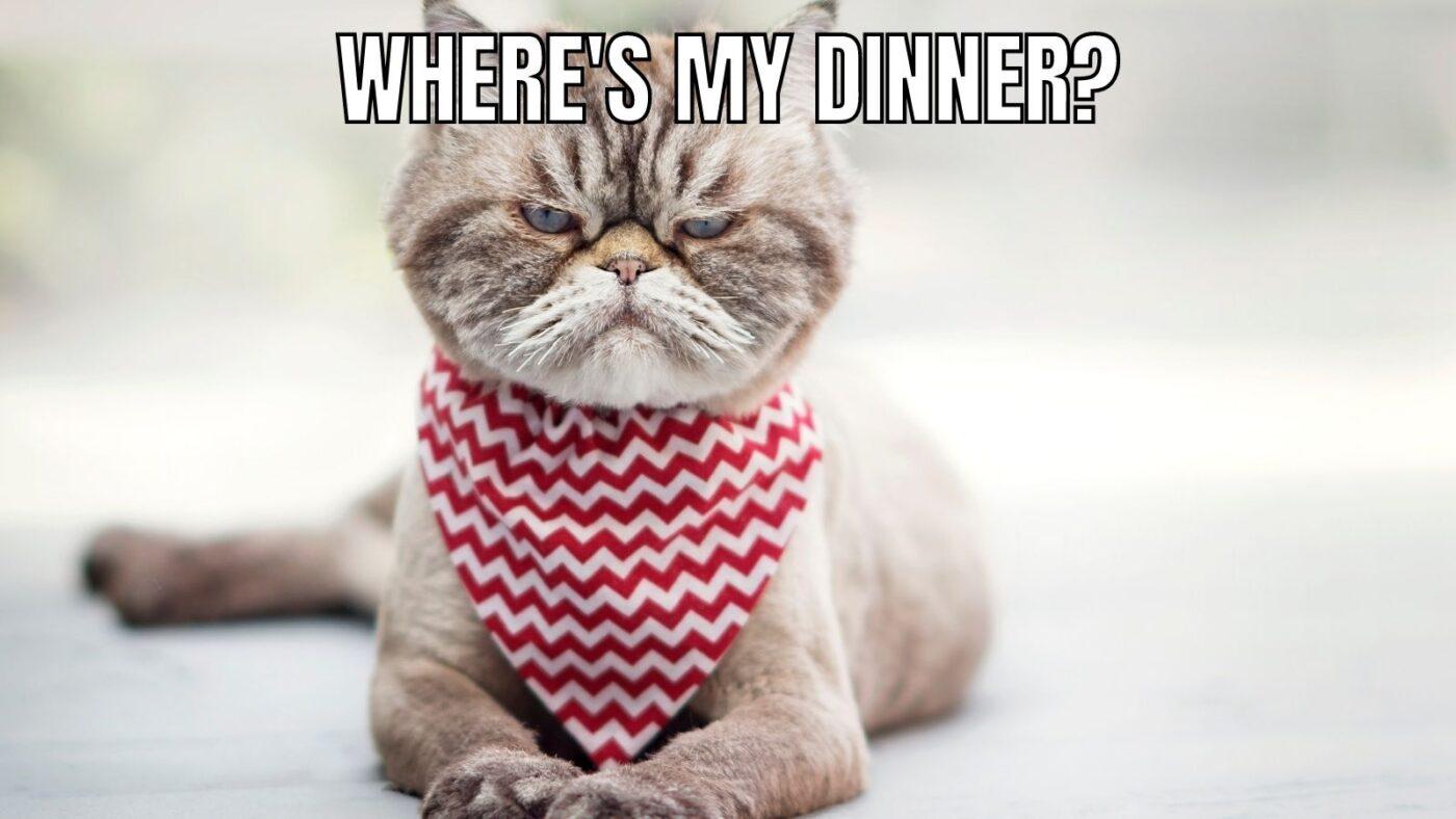 angry cat meme dinner