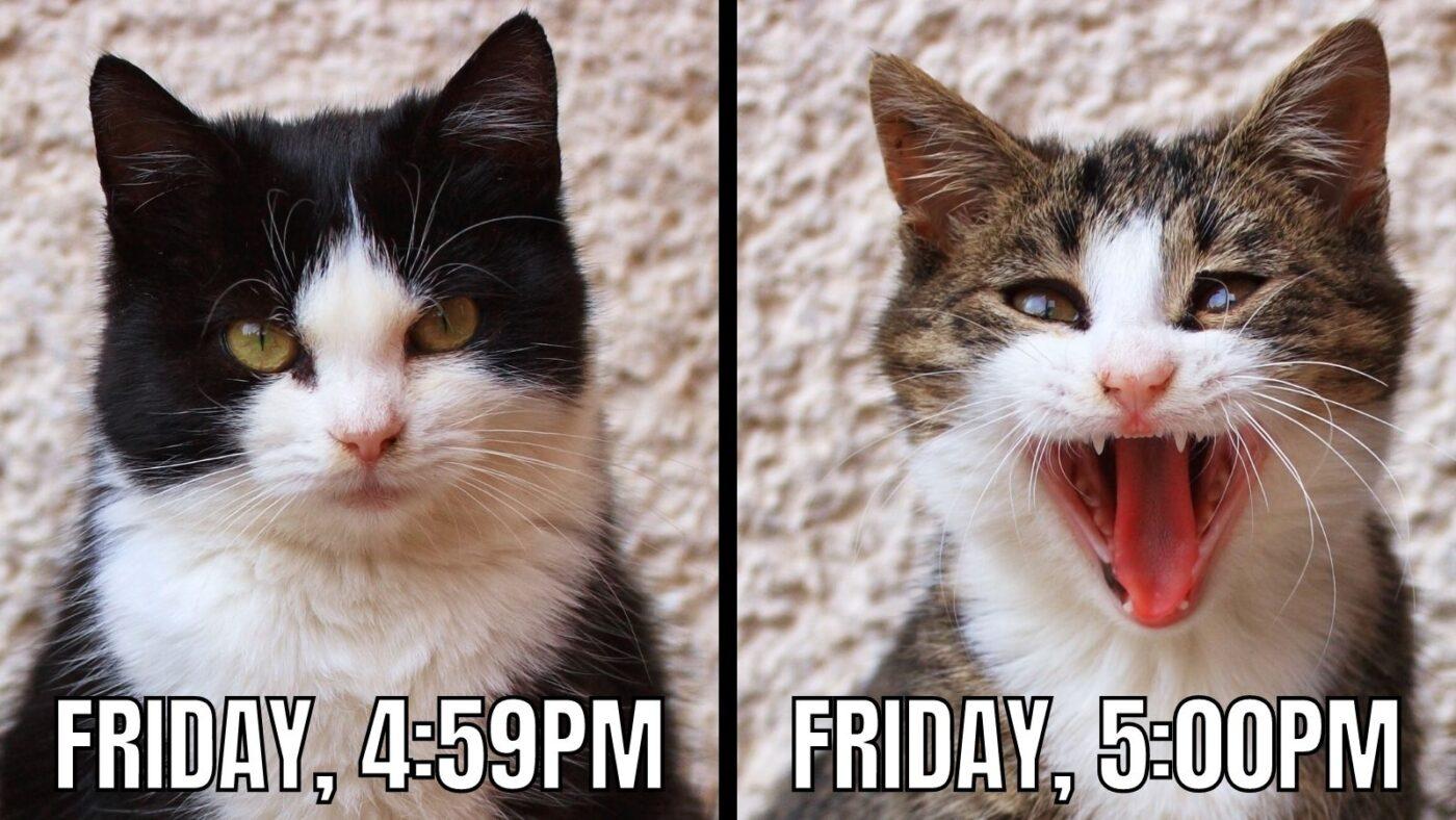 friday cat meme