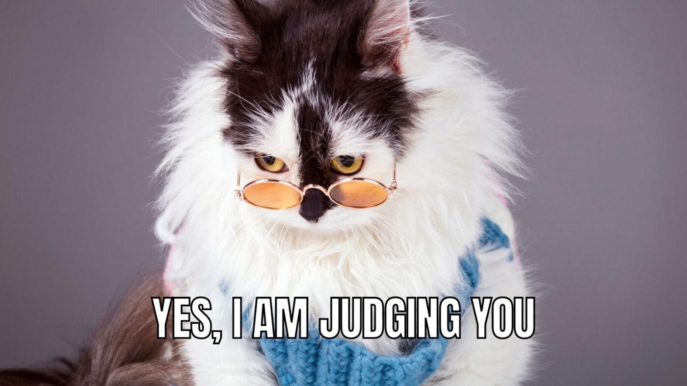 judging you cat meme