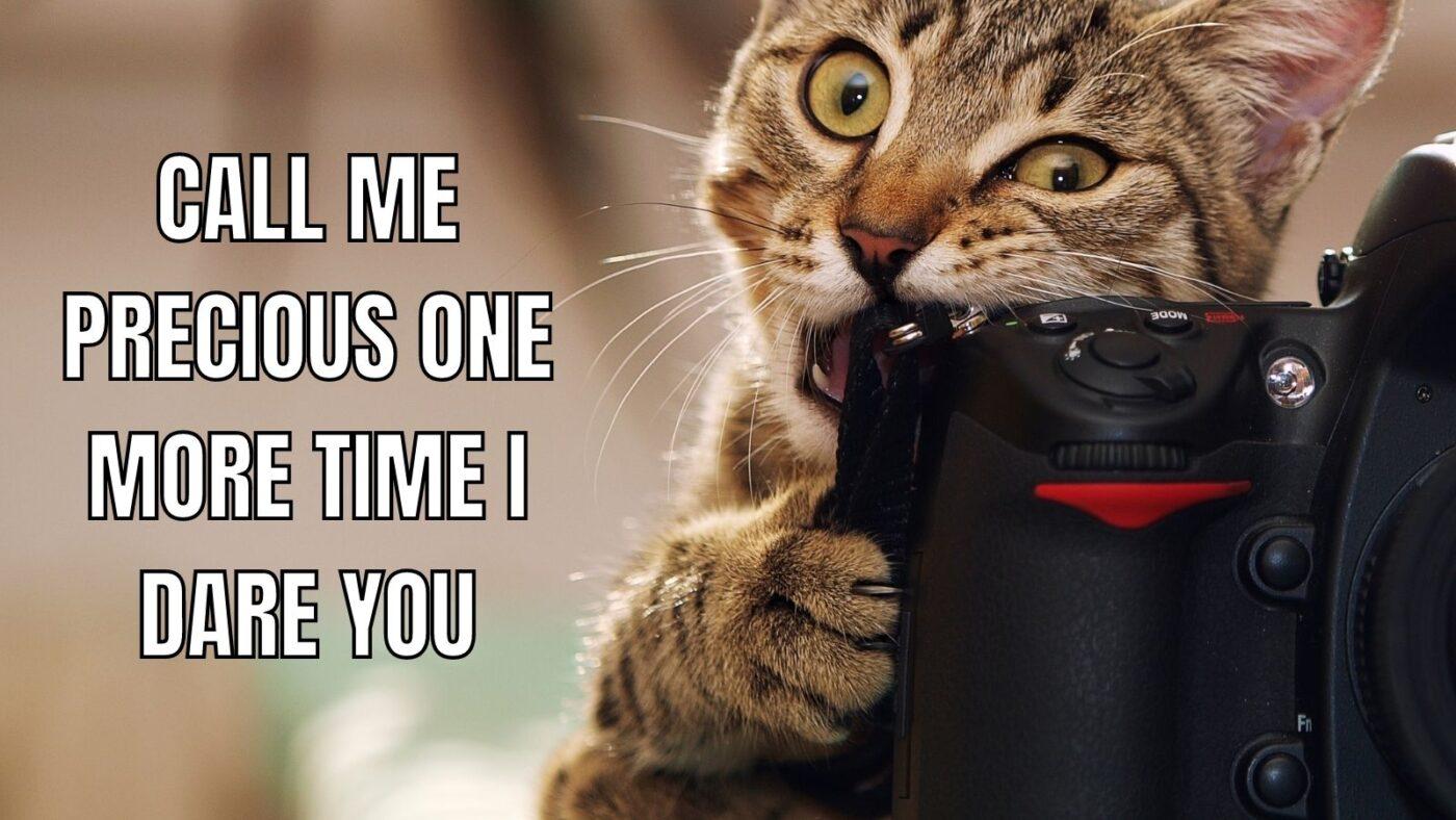 don't call me precious cat meme