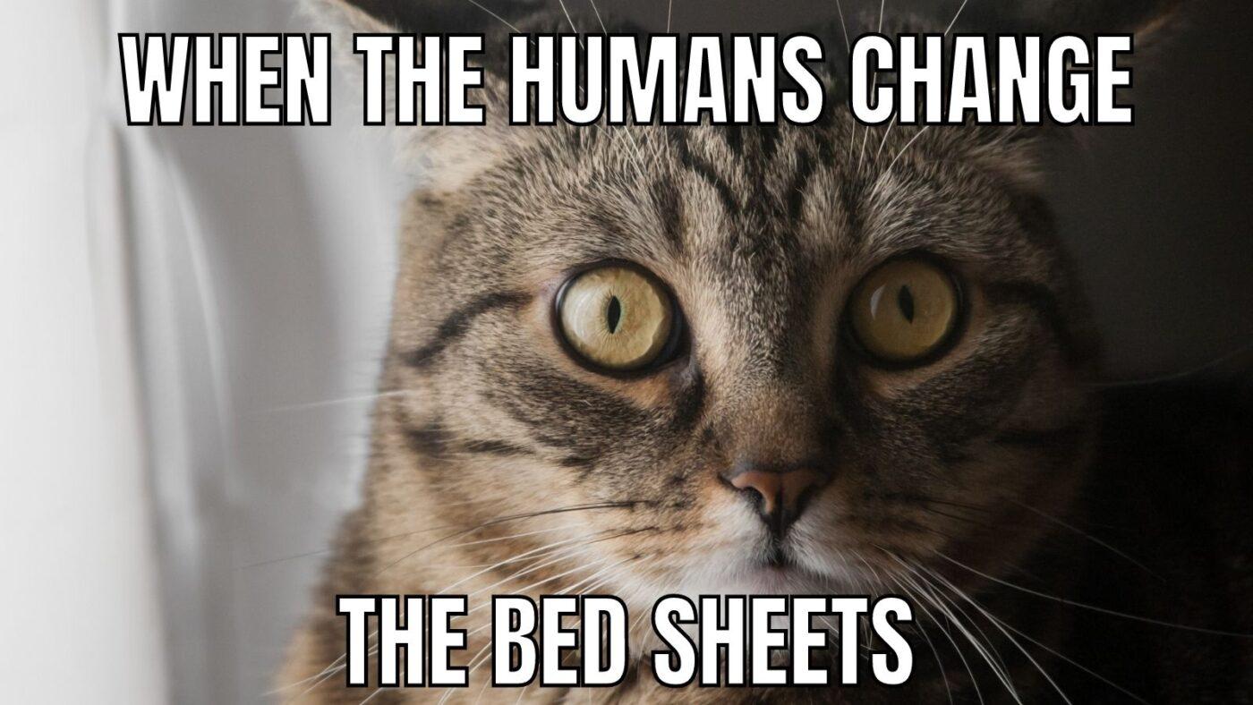 sheet changing cat meme
