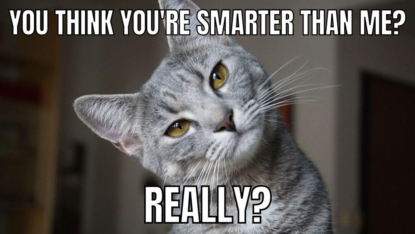 smarter cat meme