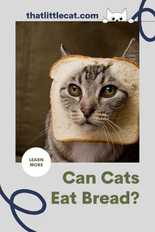 cat with bread on face