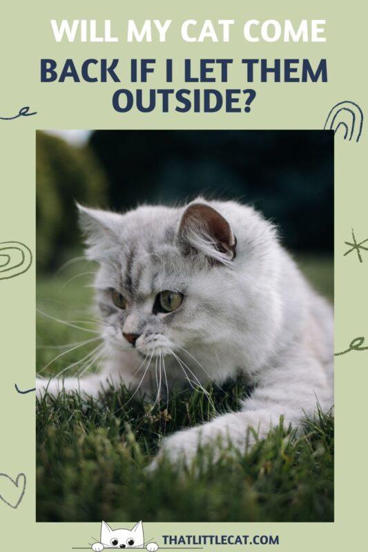 a cat outside