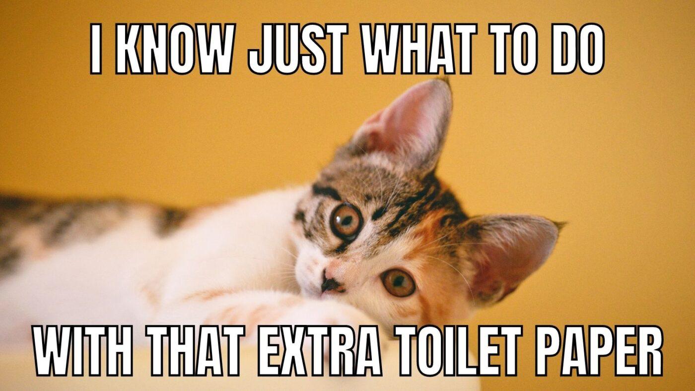 toilet paper cat meme