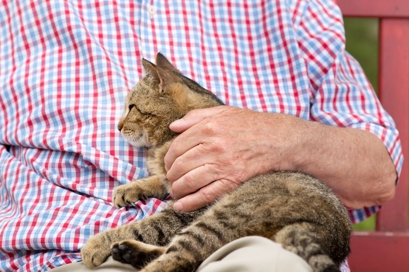 cat being pet