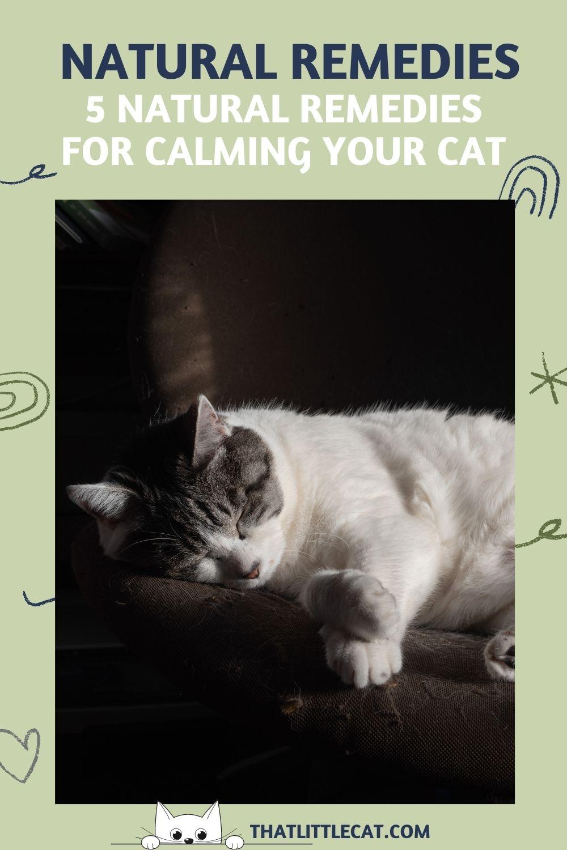 Calm and sleeping cat