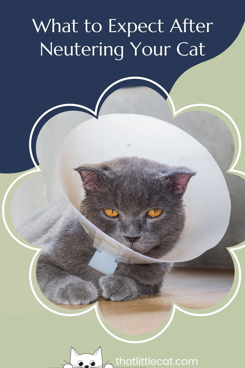 Cat with a cone on its head
